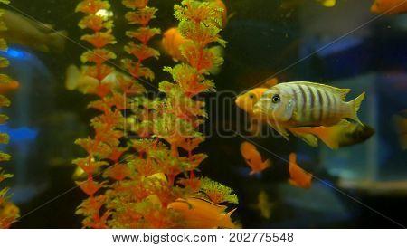 fish underwater in ocean. Fish swim in sea of beautiful video 4k ocean