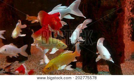 fish underwater in ocean. Fish swim in sea of video 4k beautiful ocean
