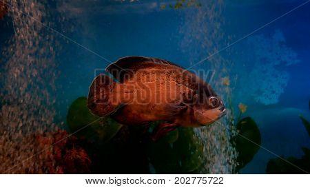 fish beautiful underwater in ocean. Fish swim in sea of beautiful ocean video 4k