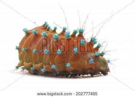 small caterpillar isolated on a white background