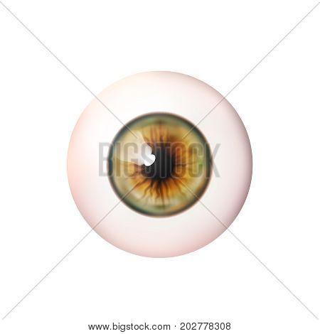 Realistic eyeball. Human eye. Vector illustration icon isolated on white.