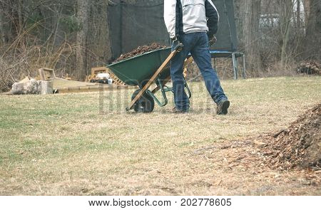 man working on backyard in spring with wheelbarrow carrying mulch