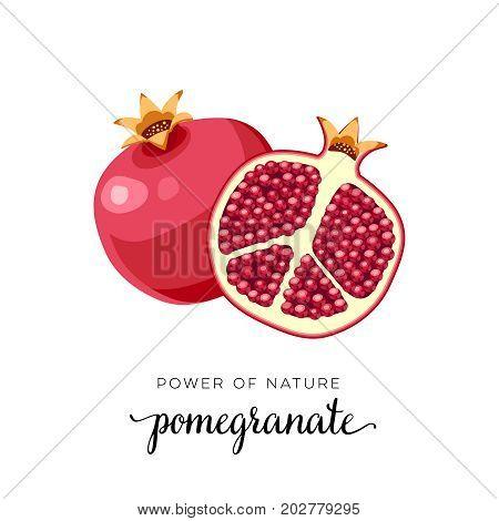 Superfood fruit. Pomegranate fruit. Vector illustration cartoon flat icon isolated on white.