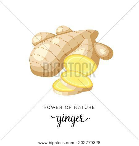 Superfood fruit. Ginger root slice. Vector illustration cartoon flat icon isolated on white.
