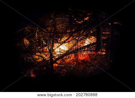 Bonfire in the forest tonight close up