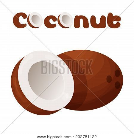 Coconut icon. Cartoon illustration of coconut vector icon for web