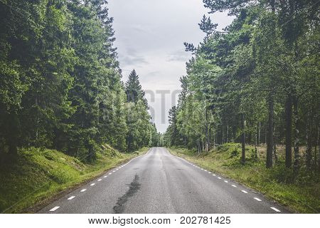 Asphalt Road In A Forest