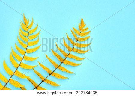 Autumn Arrives. Fall Leaves Background. Fern Leaf Fashion Design. Art Gallery. Minimal. Yellow fern Leaf on Blue. Autumn fall fashion. Vintage Concept