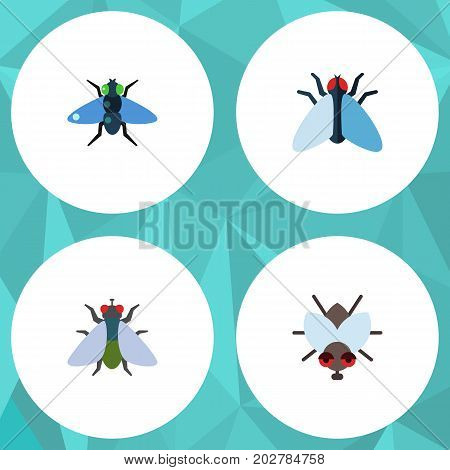 Flat Icon Buzz Set Of Dung, Fly, Buzz And Other Vector Objects