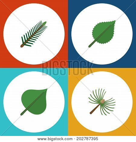 Flat Icon Ecology Set Of Spruce Leaves, Linden, Hickory And Other Vector Objects