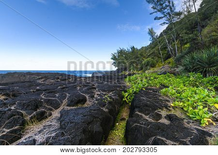 Nature And Volcanic Rocks In The South Coast Of Reunion Island