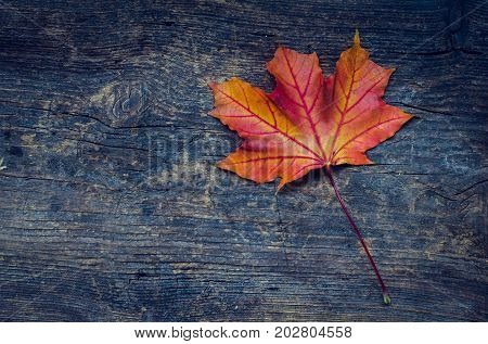 Autumn background with red fall maple leaf on rustic wooden table with place for text. Thanksgiving autumn holidays background concept. Red autumn leaf. Copy space. Top view.
