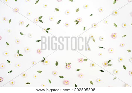 Floral frame made of white and pink chamomile daisy flowers green leaves on white background. Flat lay top view. Daisy background. Frame of flower buds.
