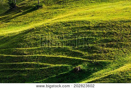 Beautiful Grassy Hillside In Sunlight