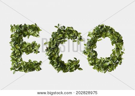 Ecology symbol from leaves isolated on white background