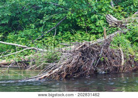 Landscape with fallen tree. Rivers of Krasnoyarsk region, Russia