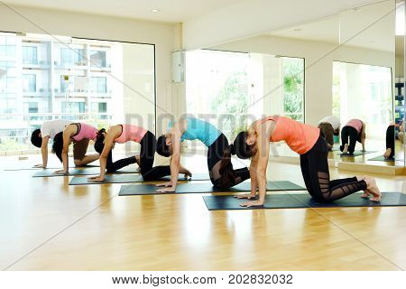 Group of asian people practicing yoga indoor studio background fitness stretching flexibility pose working out healthy lifestyles wellness well being