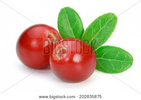 Closeup of red lingonberries (cowberries, foxberries) with leaves, isolated on the white background, clipping path included.