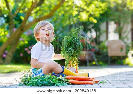 Beautiful little kid boy with carrots in domestic farm garden. Child gardening and eating outdoors. Healthy organic vegetables as food and snack for kids