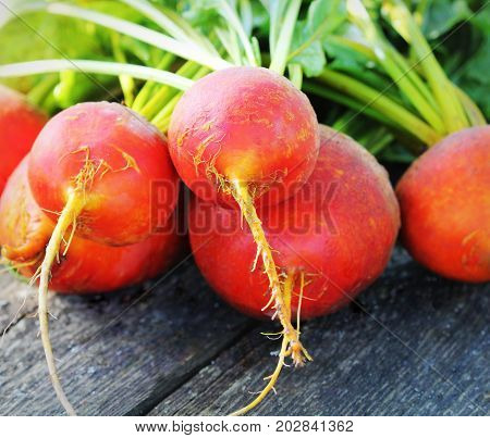 Raw organic golden beets on rustic wooden background .