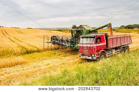 Industrial harvesting of wheat in Europe. Rich harvesting concept
