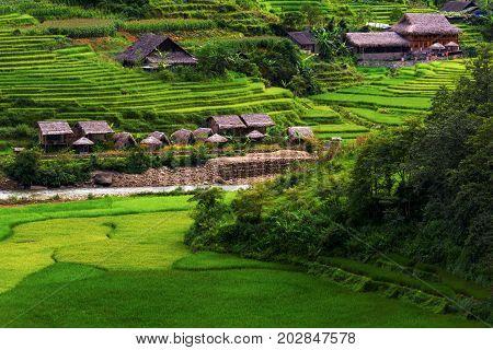 Beautiful scene of rice fields and terrace on daylight sunshade at Sapa Vietnam.