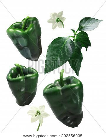 Ancho Grande Chile Peppers, Elements, Paths