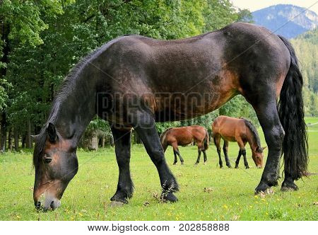 horse on a grassland close up photo
