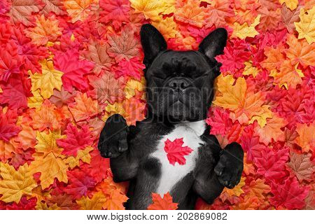 Autmn Fall Leaves Dog