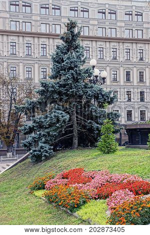Green spruce and part of the flower bed in the city park in front of a multi-storey building with windows