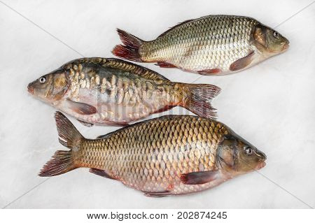 Carp preparation for butchering and cooking the fresh background. Three fish to the scales. The horizontal frame.