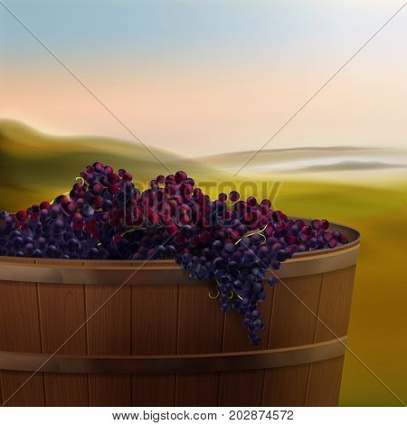 Vector wooden vat of red grapes for wine in valley isolated on background