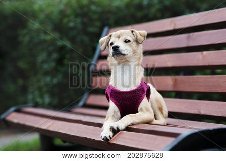 adorable mixed breed puppy posing outdoors in autumn