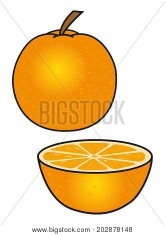 The orange. Orange whole and sliced in half, isolated on white. Vector illustration