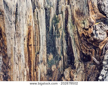 Texture Old Tree Wood, Annual Growth Ring
