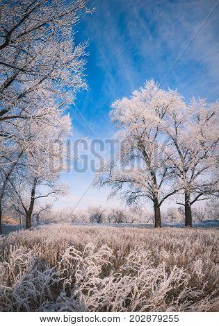 Winter Landscape_2