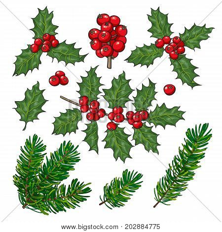 Set of fir tree and mistletoe branches with leaves and berries, Christmas decoration elements, sketch vector illustration on white background. Fir tree and mistletoe set, twigs, leaves and branches