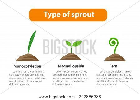 Type of sprout Plant infographic vector design