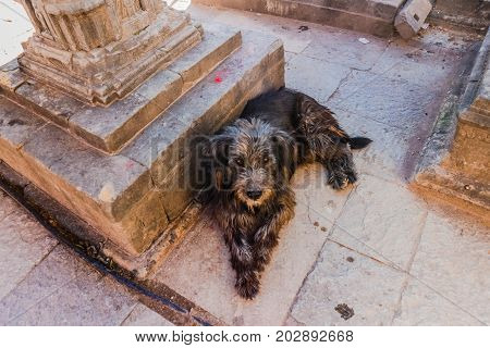 Mixed Breed Medium Sized Black  And Brown Color Dog Lying On Temple Ground In Kathmandu, Nepal