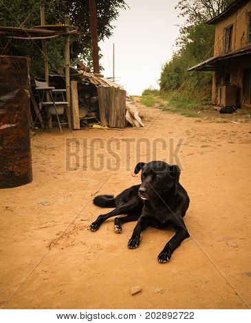 Lonely Black Stray Dog Resting On The Ground In Kathmandu Village, Nepal.