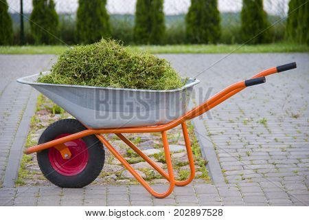 Wheelbarrow with garden waste on a lawn.