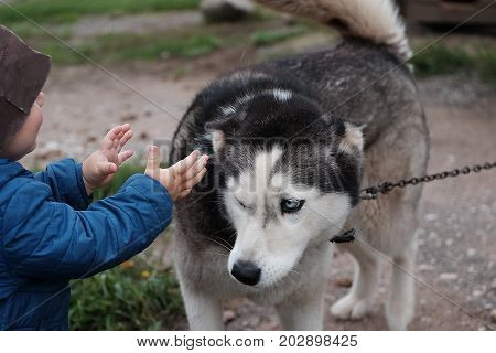 Little boy about to hug a tethered dog outdoor cropped photo