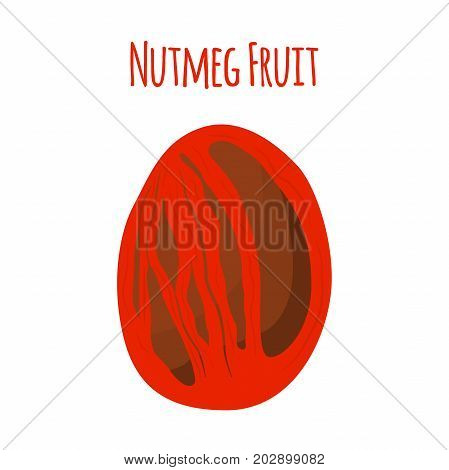 Nutmeg organic nut, ground seed. Healthy vegetarian food. Made in cartoon flat style. Vector illustration