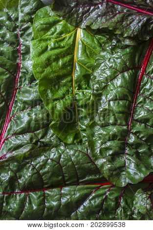 Chard background close-up. Vegetables food background top view free space for text