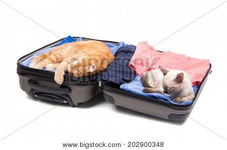 A ginger cat and a Siamese kitten sleeping peacefully on an open, packed suitcase, on white background