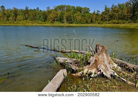 A weathered old beaver chewed stump and water soaked log are on the shoreline of a pond of water.