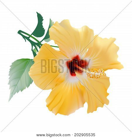 Hibiscus. Hand drawn vector illustration of a large, yellow tropical flower on transparent background.