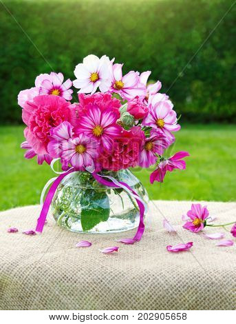 A bouquet of pink and white cosmea flowers in glass vase. Cosmos flowers from the garden isolated on green background.