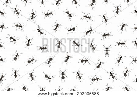 Seamless pattern ants in flat style on white background
