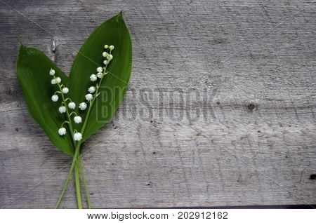 White Lilly of the Valley flowers on wood background